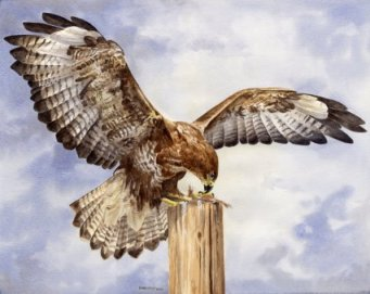 Image of Buzzard Wings painting