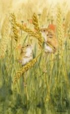 Harvest mice image